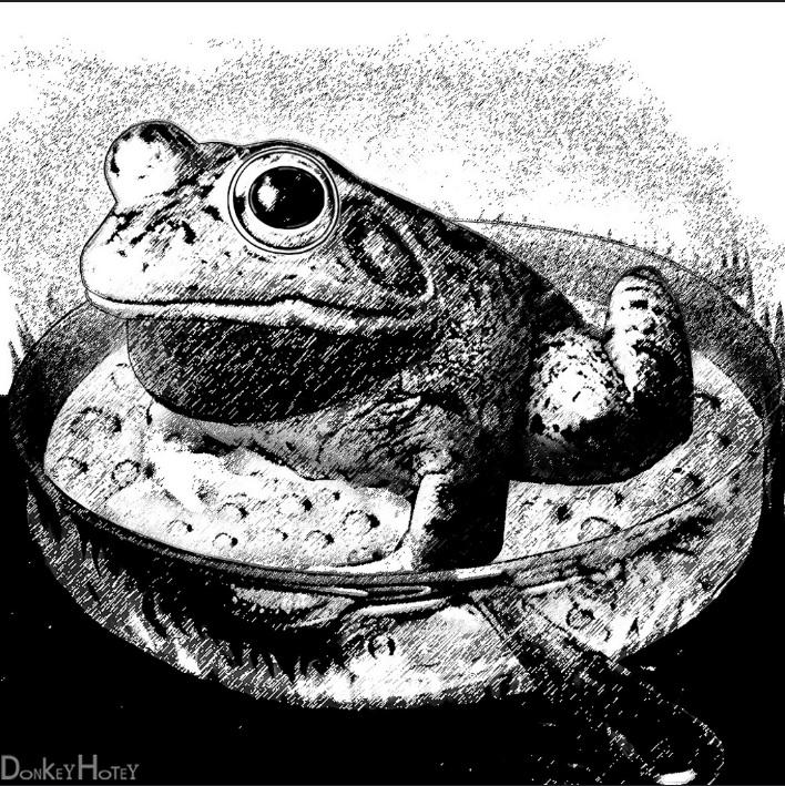 boiling-frog-donkey-hotey